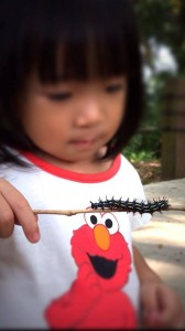 The Very Hungry Caterpillar was at the Southern Ridges too!