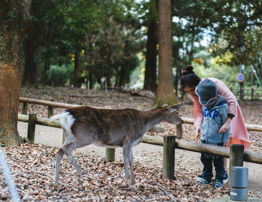 With the four-year-old in Nara Deer Park